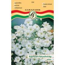 Gypsophila elegans / Egynyári fátyolvirág