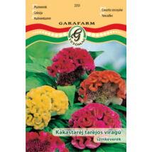 Celosia argentea - Kakasteréj taréjos virágú (színkeverék)