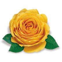 Rosa 'Casanova' / Sárga magastörzsű teahibrid rózsa