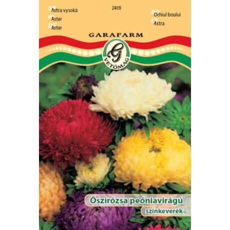 Őszirózsa Peoniavirágú Színkeverék