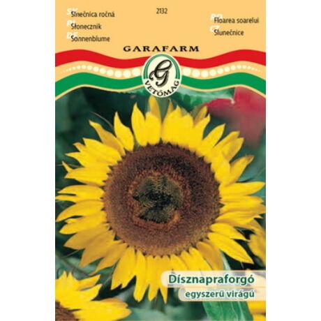Helianthus annuus / Dísznapraforgó egyszerű virágú