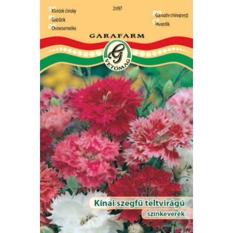 Dianthus chinensis / Kínai szegfű teltvirágú színkeverék