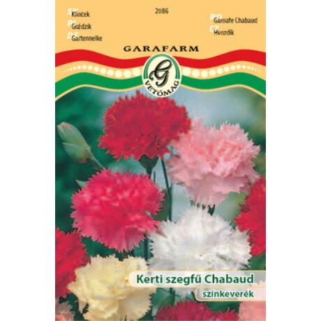 Dianthus caryophyllus / Kerti szegfű Chabaud színkeverék