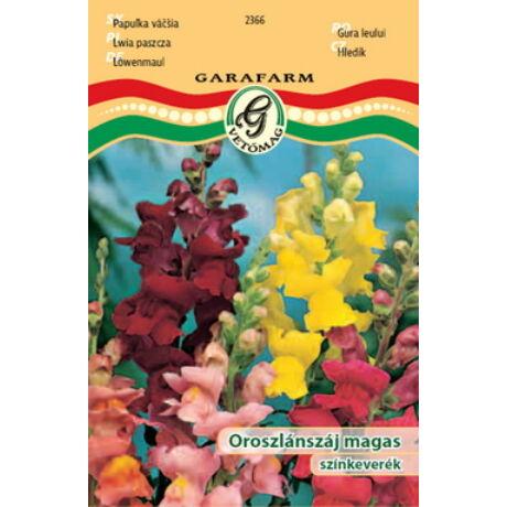 Antirrhinum majus / Oroszlánszaj magas színkeverék