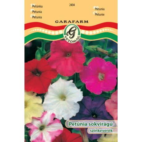 Petunia x hybrida / Petúnia sokvirágú színkeverék