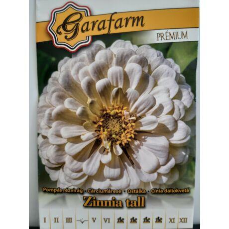 Zinnia tall / Pompás rézvirág dáliavirágú fehér (prémium)