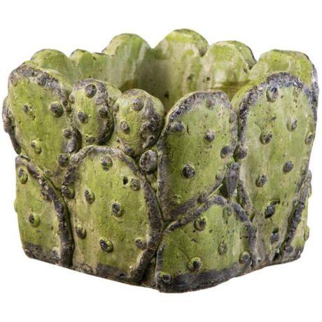 Virágláda kocka 'Cactus' 14 cm